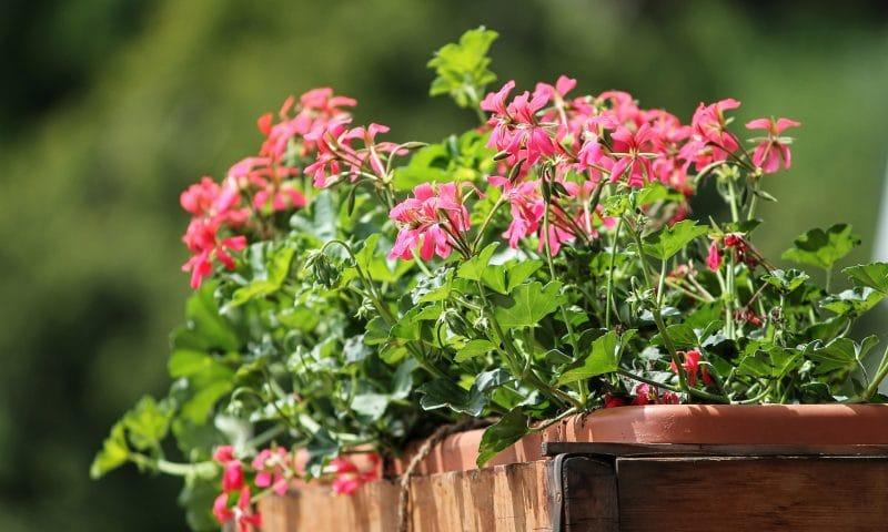 Choisir ses pots ou jardinières pour votre jardin