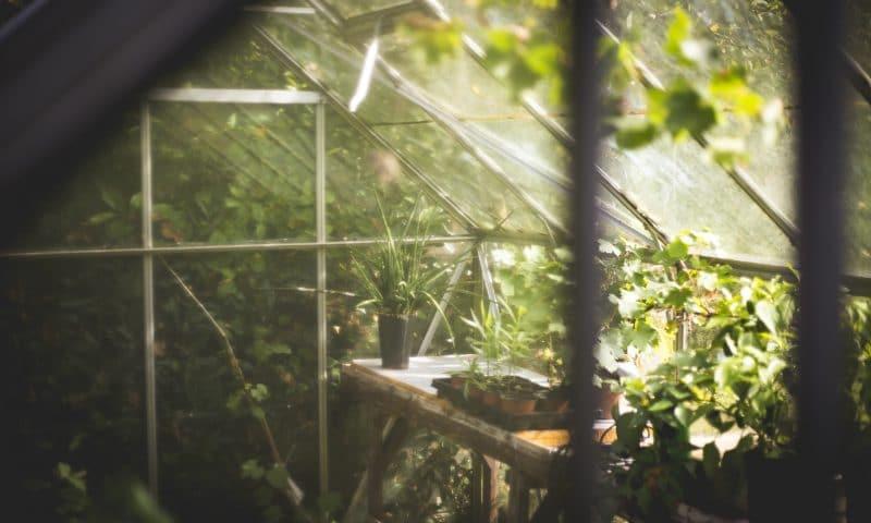 Comment choisir la bonne serre pour votre jardin