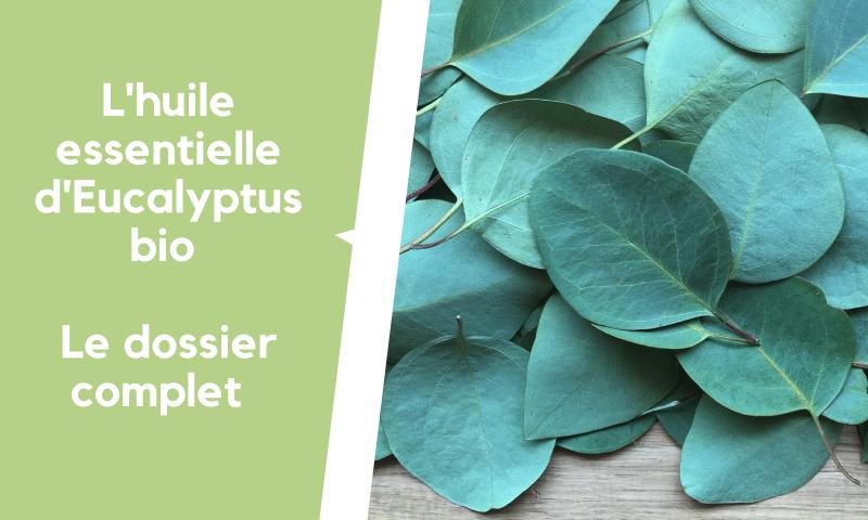 L'huile essentielle d'eucalyptus bio
